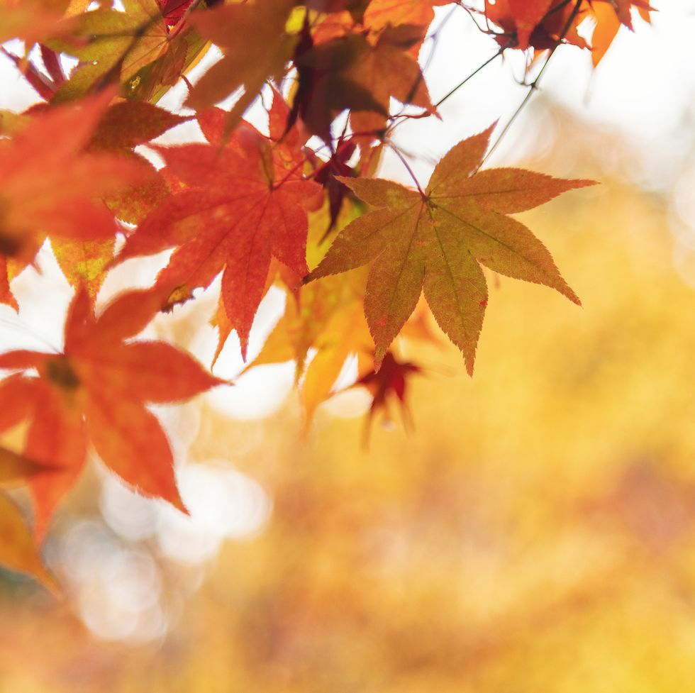 Celebrate emotional wellness month this fall